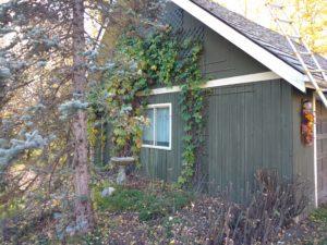 Old ceder roof4