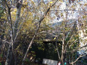 Old ceder roof7